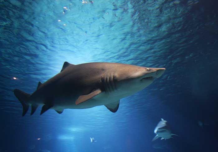 Tiburones en Ciudad del Cabo