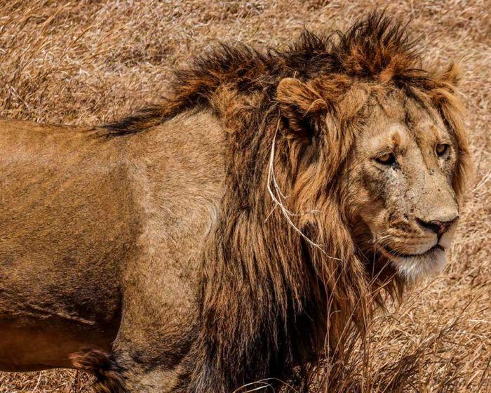 León Tanzania